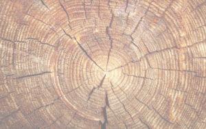 нужно спилить дерево