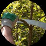 спилить ветки деревьев