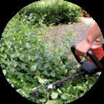 спилить сухое дерево