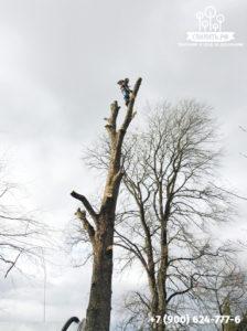 Удаление опасного дерева частями