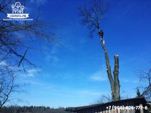 Удаление опасного дерева
