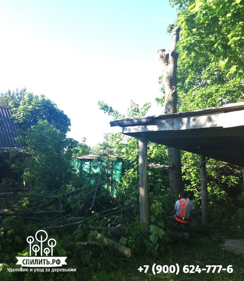 Удаление дерева