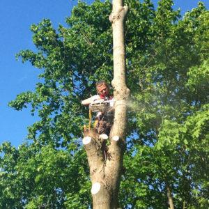 Удаление-мешающего-дерева-рядом-с-другими-деревьями