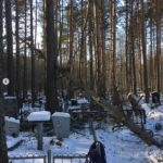 спилить дерево на кладбище
